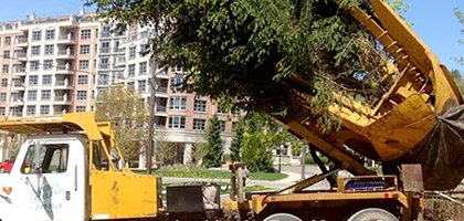 Tree Moving Services by Caledon Treeland